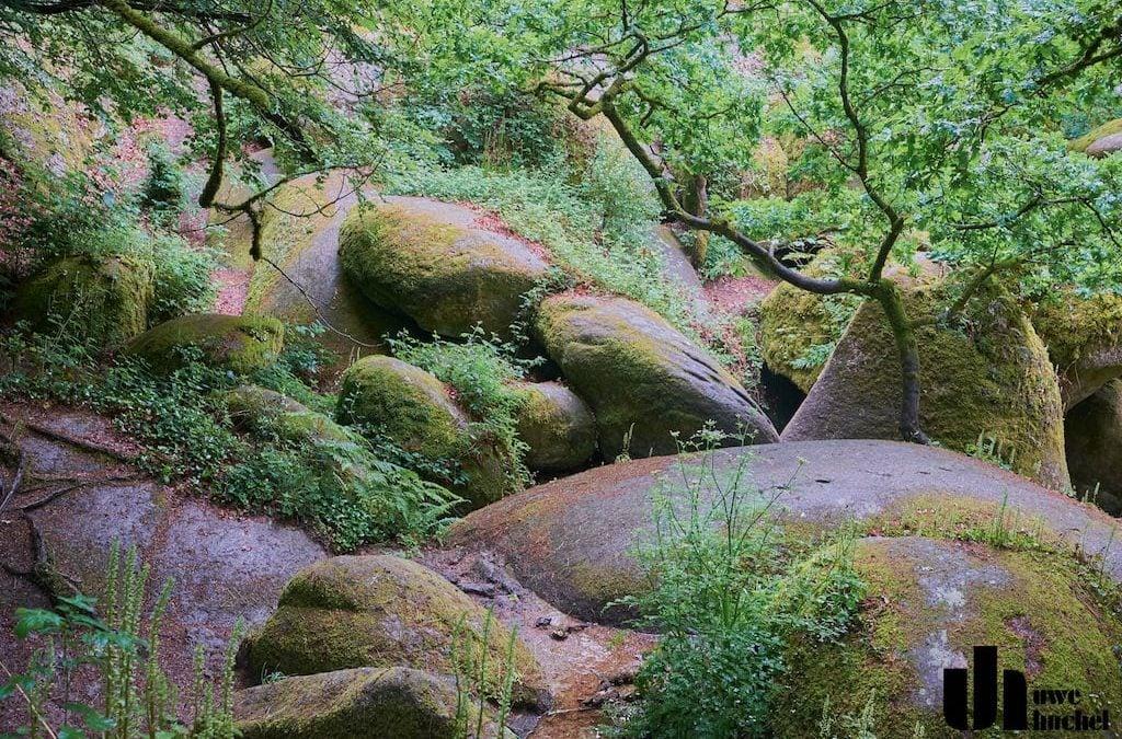 Wald von Huelgoat